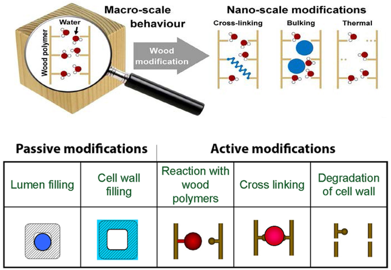 Sandberg D, Kutnar A, Mantanis G (2017). Wood modification technologies - a  review. iForest - Biogeosciences and Forestry 10: 895-908.